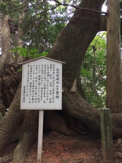 武内宿禰命のお手植えの楠