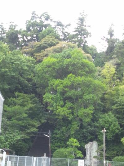 森というよりは「杜」。確かにパワーがありそうだな。宇那木神社の鎮守の森